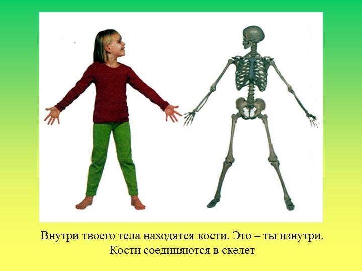 Внутри твоего тела находятся кости. Это – ты изнутри.Кости соединяются в скелет