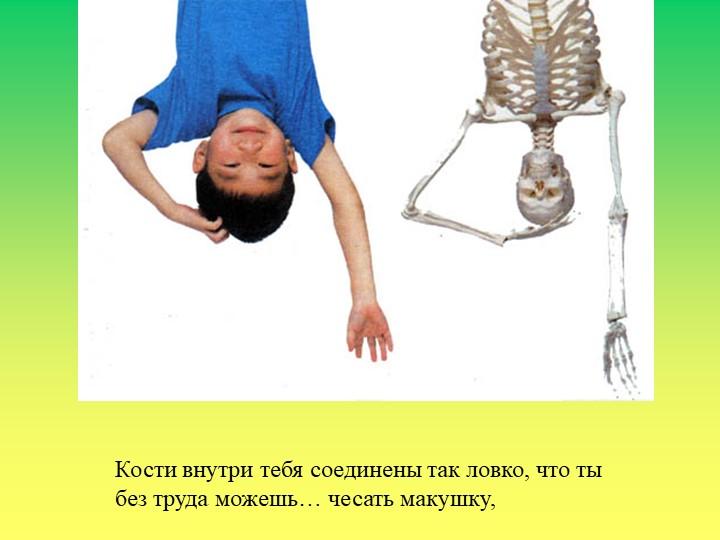Кости внутри тебя соединены так ловко, что тыбез труда можешь… чесать макушку,