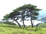 Картинки по запросу деревья