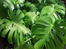 Картинки по запросу растения