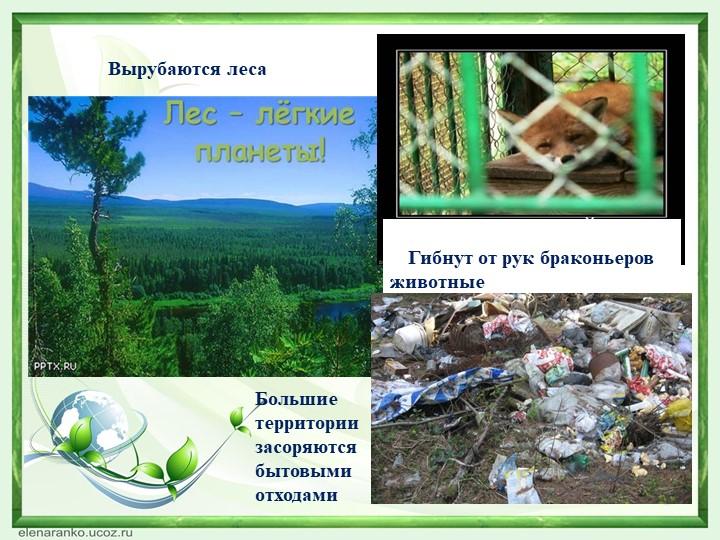 Вырубаются леса                      Гибнут от рук браконьеров      животные...