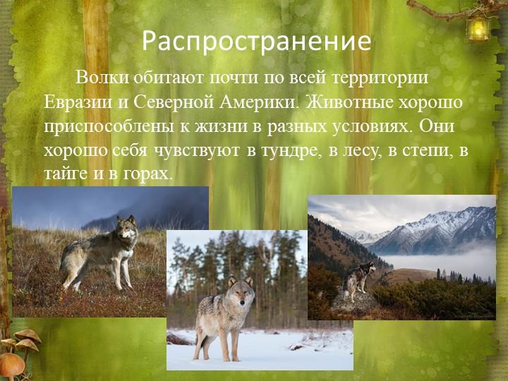 РаспространениеВолки обитают почти по всей территории Евразии и Северной Ам...