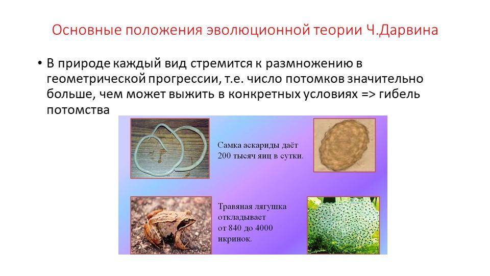 Основные положения эволюционной теории Ч.ДарвинаВ природе каждый вид стремитс...