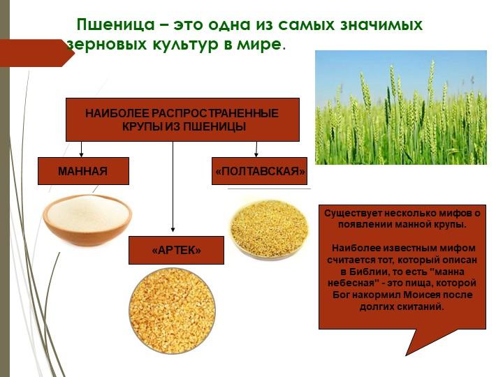 Пшеница – это одна из самых значимых зерновых культур в мире. НАИБОЛЕЕ...