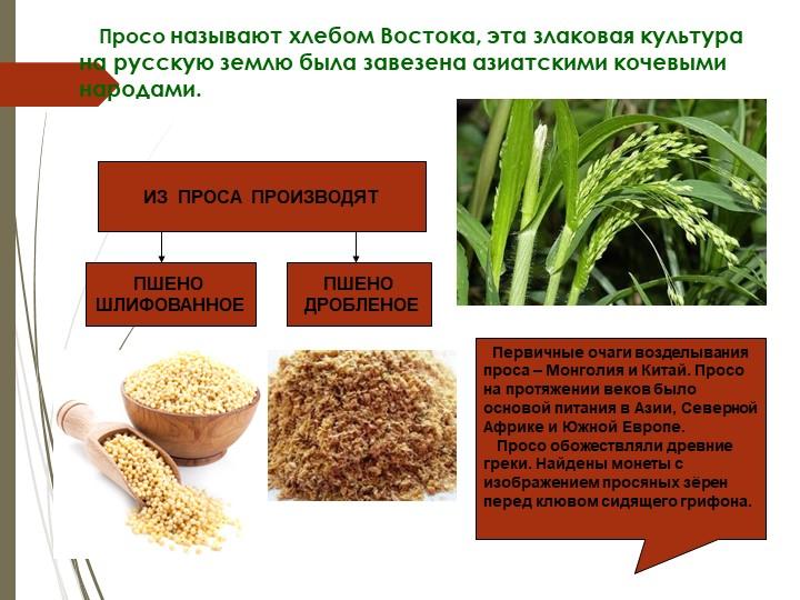 Просо называют хлебом Востока, эта злаковая культура на русскую землю...