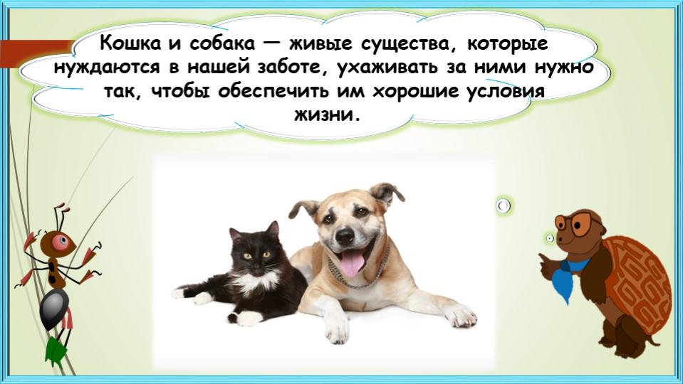 Кошка исобака— живые существа, которые нуждаются внашей заботе, ухаживать...