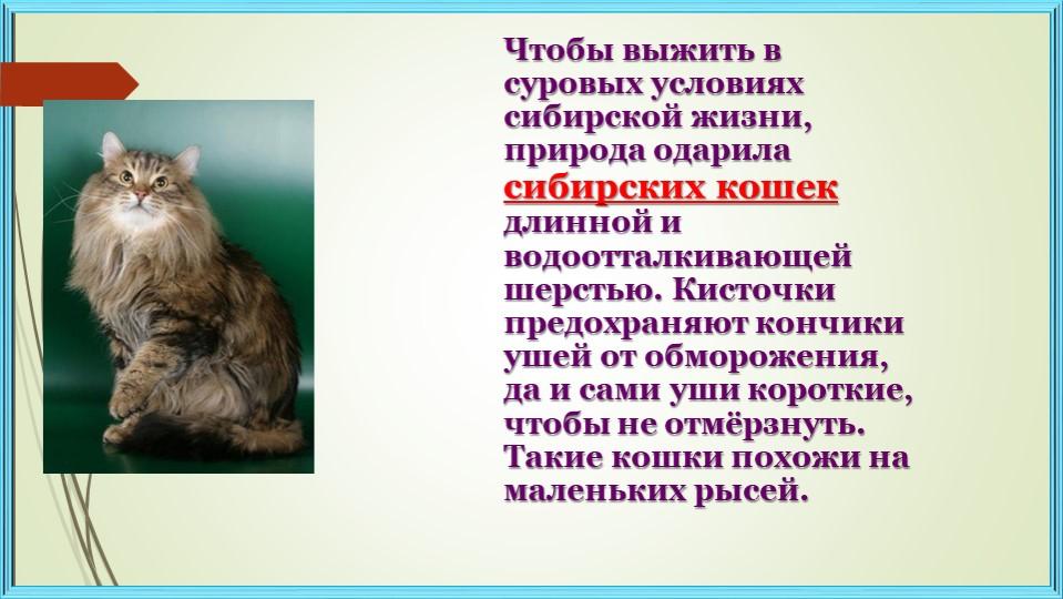 Чтобы выжить в суровых условиях сибирской жизни, природа одарила сибирских ко...