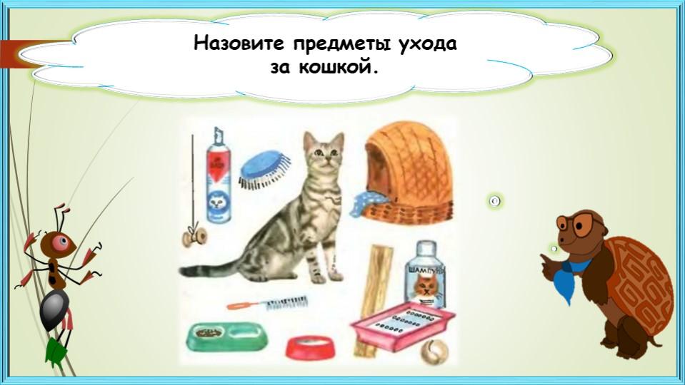 Назовите предметы уходаза кошкой.