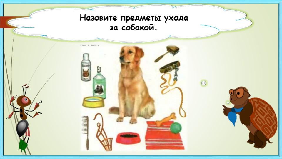 Назовите предметы уходаза собакой.
