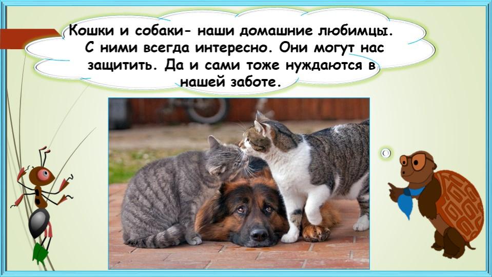 Кошки и собаки- наши домашние любимцы. С ними всегда интересно. Они могут на...