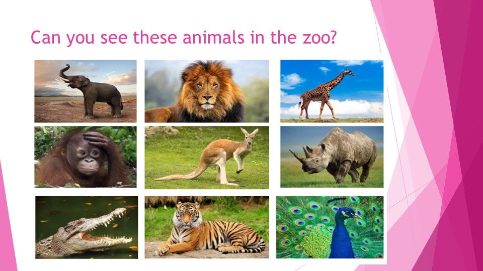 Can you see these animals in the zoo?