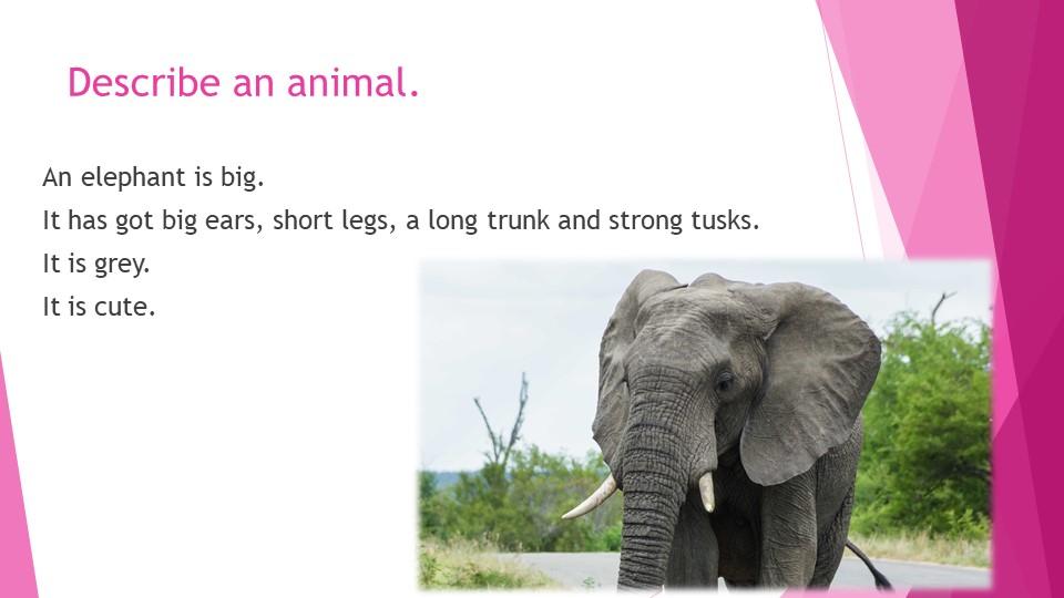 Describe an animal.An elephant is big. It has got big ears, short legs, a lo...